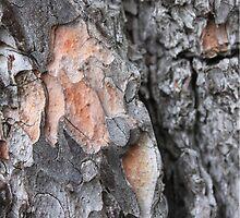 Pine Bark  by Gregonis