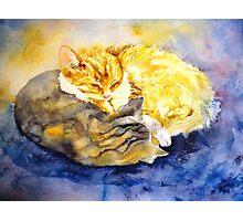 Cozy Kitties Photographic Print