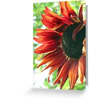 sunflowers Grow in Mo's Garden 2 Greeting Card