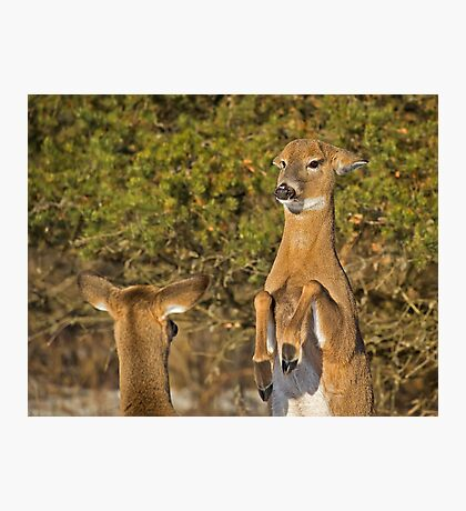 Put up your Dukes Photographic Print