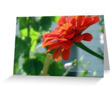 orange zinnias grow in mo's garden Greeting Card