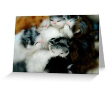 Kittens In Aisle 4? Greeting Card