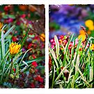 Colorful Grass and Flower :: Diptych by Silvia Ganora