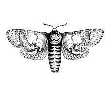 Death Moth Photographic Print
