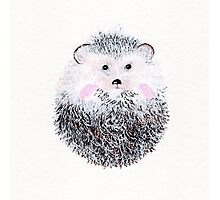 Hedge Hog Photographic Print