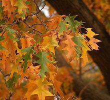 Farewell Autumn by elasita
