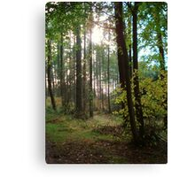 Forest in the Winter sun Canvas Print