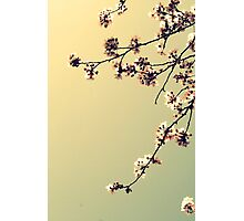 Elegance in bloom II Photographic Print