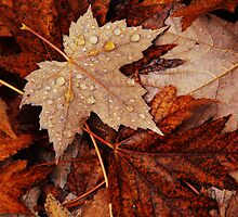 Autumn's Leaf Litter by Emma Stone