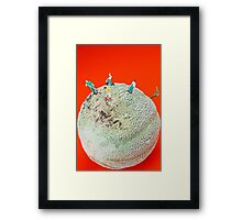 Dirty Cleaning On Sweet Melon Framed Print