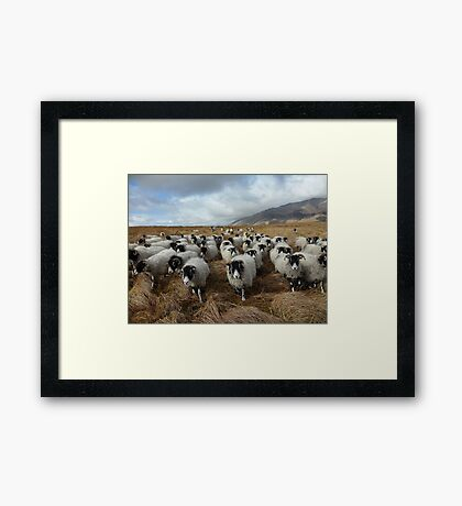 Shepherd - Lake District Framed Print