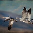 flight of the snow geese by bettywiley