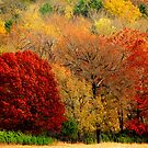 Mother Nature's Painting Her Landscapes,  Again! by NatureGreeting Cards ©ccwri