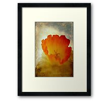 A memory of spring past © Framed Print