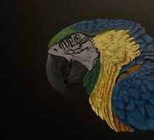 Macaw in colour by ArtbyRJGMIC