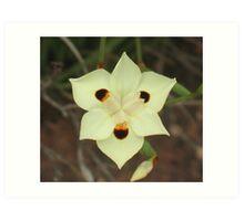 African Iris, Dietes bicolor Art Print