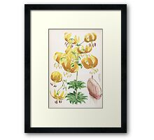 A Monograph of the Genus Lilium Henry John Elwes Illustrations W H Fitch 1880 0151 Framed Print
