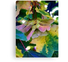 Fall Leaves 2 (Maple) Canvas Print