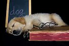 Dog Tired by Maria Dryfhout