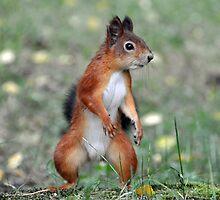 Ninja Squirrel by Janne Tuominen