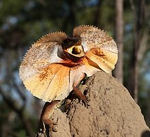 Super Frilled Neck Lizard by cute-wildlife