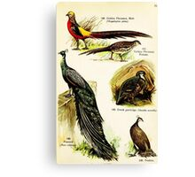 Colorful 1909 children's bird book illustration  Canvas Print