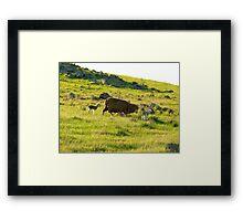 New born lambs Framed Print