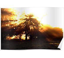 - Rays of sun on Bridge Farm Poster