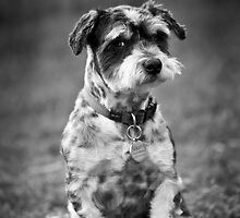 Scruffy the Dog by Adriana Glackin
