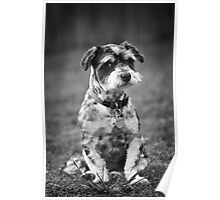 Scruffy the Dog Poster