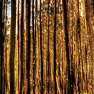 Bushfire Abstract - Victorian High Country - The HDR Experience by Philip Johnson