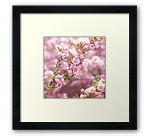 Pink Blossoms in Spring Framed Print