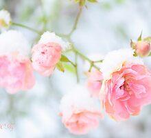 Winter beauty by aMOONy