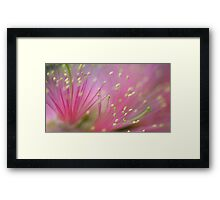 Pink Fluff - bottlebrush flower Framed Print