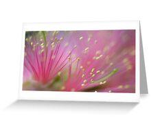Pink Fluff - bottlebrush flower Greeting Card