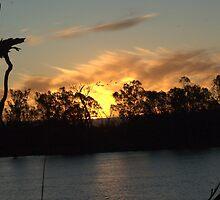Swans, Sunset, Serene - River Murray by imaginethis