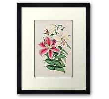 A Monograph of the Genus Lilium Henry John Elwes Illustrations W H Fitch 1880 0043 Framed Print
