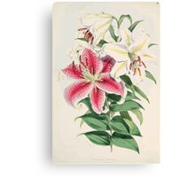 A Monograph of the Genus Lilium Henry John Elwes Illustrations W H Fitch 1880 0043 Canvas Print