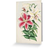 A Monograph of the Genus Lilium Henry John Elwes Illustrations W H Fitch 1880 0043 Greeting Card