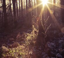 Forest Flare by Shotslot