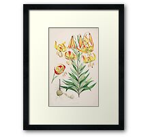 A Monograph of the Genus Lilium Henry John Elwes Illustrations W H Fitch 1880 0115 Framed Print