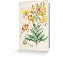 A Monograph of the Genus Lilium Henry John Elwes Illustrations W H Fitch 1880 0115 Greeting Card