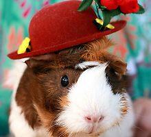 Fancy dress - Guinea pig in little red hat by Jess Proietti