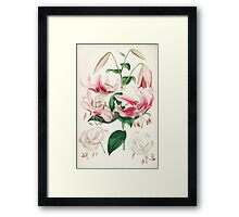 A Monograph of the Genus Lilium Henry John Elwes Illustrations W H Fitch 1880 0159 Framed Print
