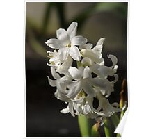 Pure white flowers Poster