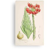 A Monograph of the Genus Lilium Henry John Elwes Illustrations W H Fitch 1880 0093 Canvas Print