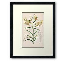 A Monograph of the Genus Lilium Henry John Elwes Illustrations W H Fitch 1880 0119 Framed Print