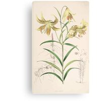A Monograph of the Genus Lilium Henry John Elwes Illustrations W H Fitch 1880 0119 Canvas Print