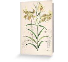 A Monograph of the Genus Lilium Henry John Elwes Illustrations W H Fitch 1880 0119 Greeting Card