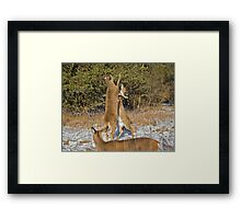 Let's get ready to rumble... Framed Print